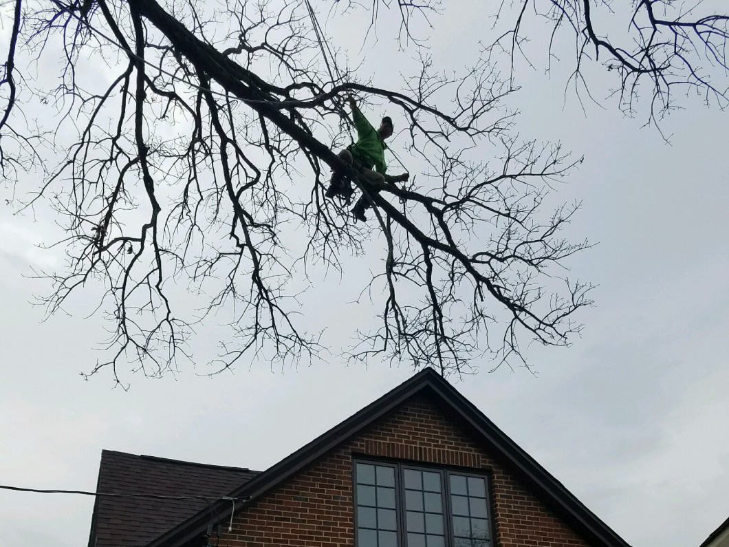 Leave the Tree Work to A-1 Tree and Lawn, Inc.